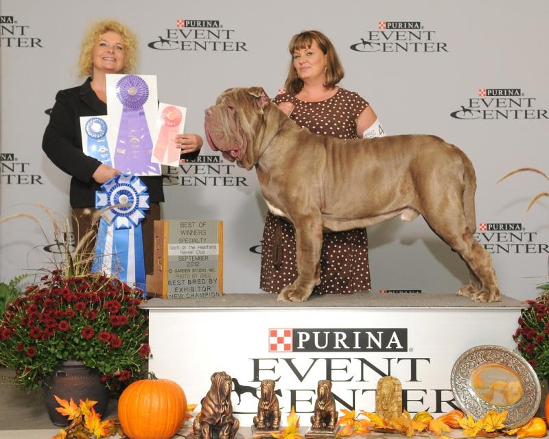 Bred By Ex. AKC CH. Maximum's Morocco